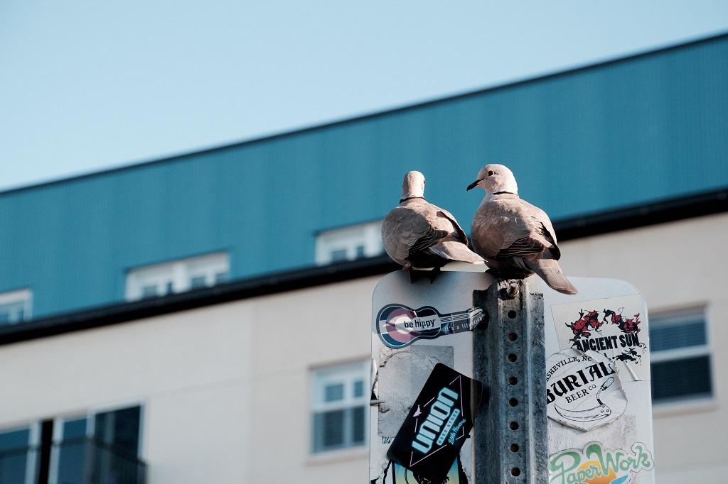 Pigeon - STRONA GŁÓWNA